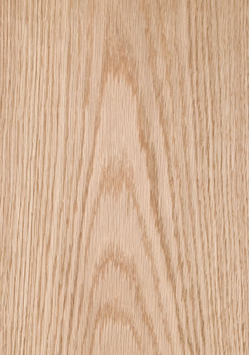 Wood species veneer european oak