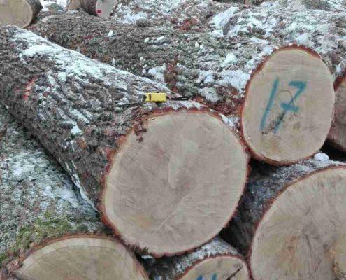 Seleccion de troncos
